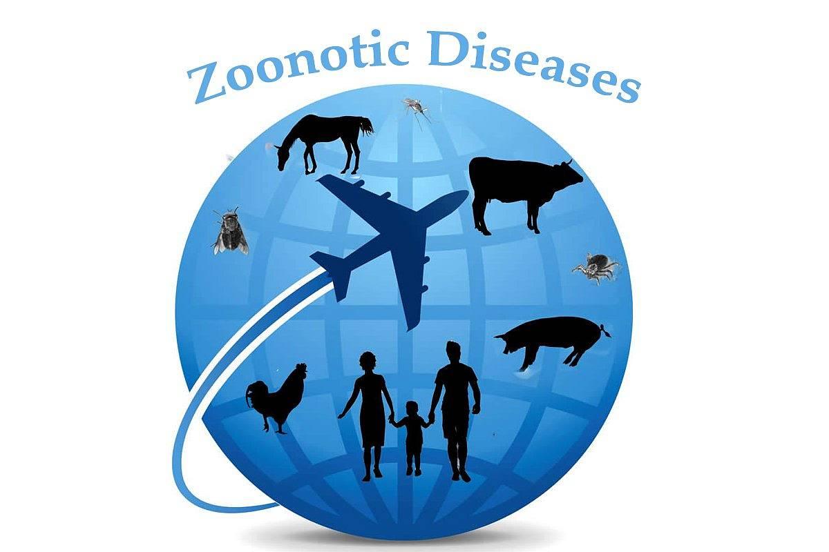 Lancement d'un réseau national de recherche sur les infections zoonotiques