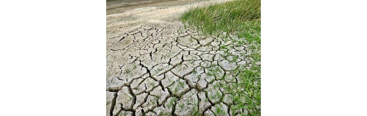 Changement climatique : la #photosynthèse artificielle pour limiter le #réchauffement planétaire ?