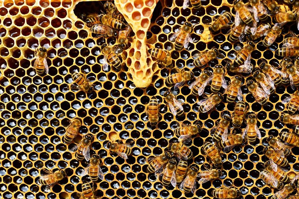 Présentation du nouveau plan abeilles et pollinisateurs de la ville de Berlin