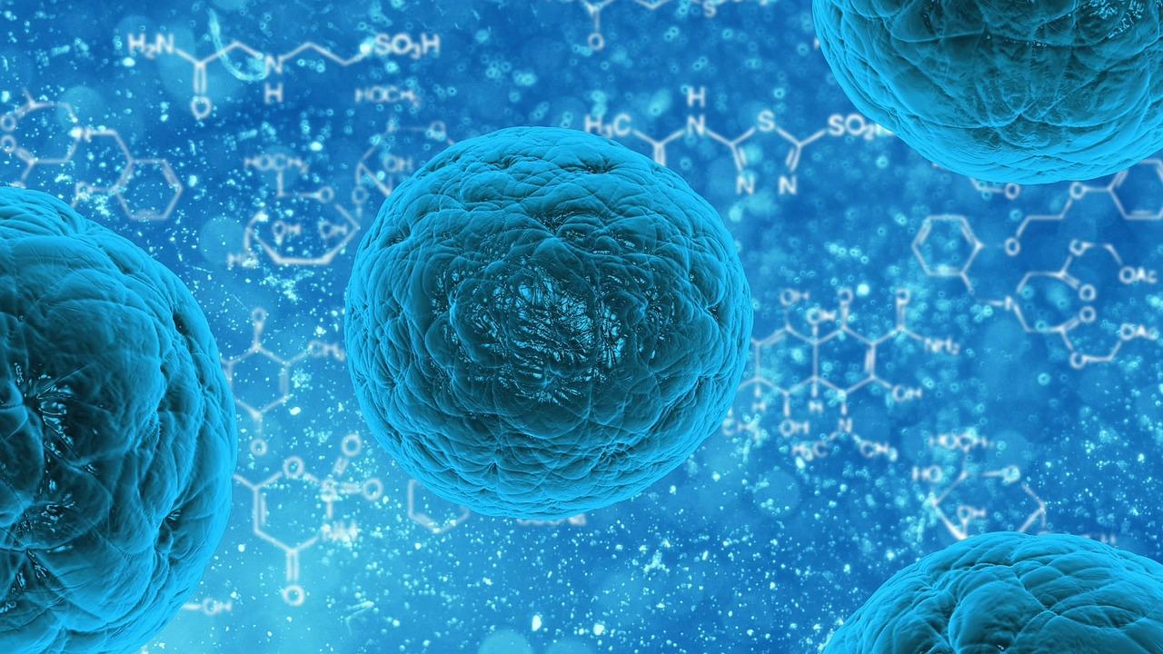 Appel à projets franco-allemand dans le domaine de la résistance antimicrobienne