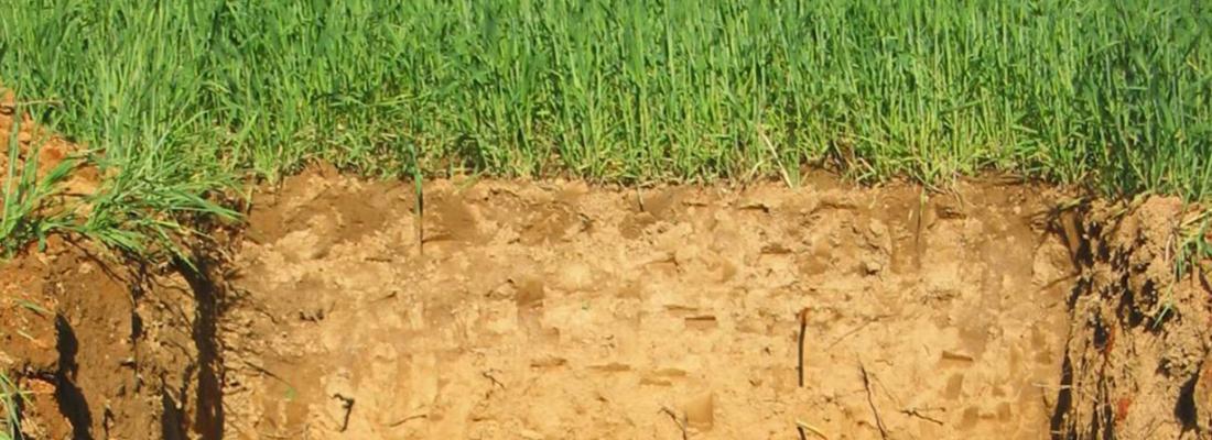 L'INRAE et l'université de Bonn mettent en lumière les enjeux d'une gestion durable des sols agricoles pour séquestrer le carbone